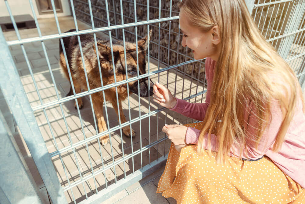 A woman petting a German Shepherd dog at an animal rescue shelter.