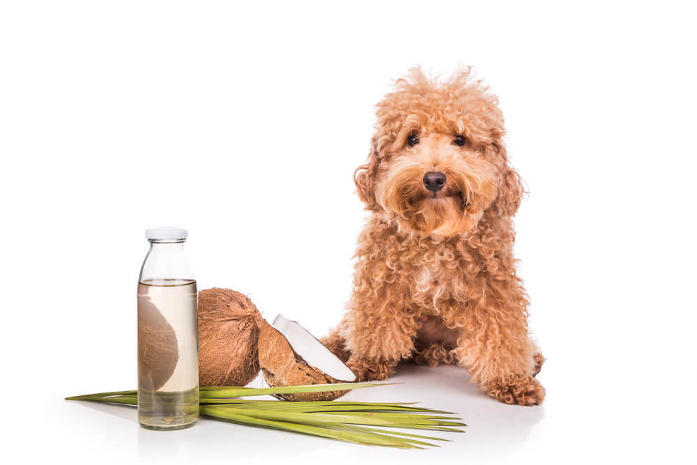 Coconut oil use for dogs with dry and sensitive skin