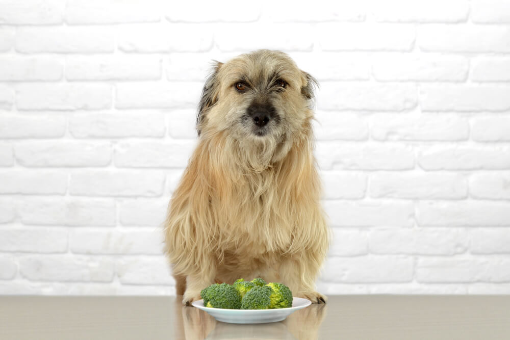 Dog eating from a plate full of broccoli