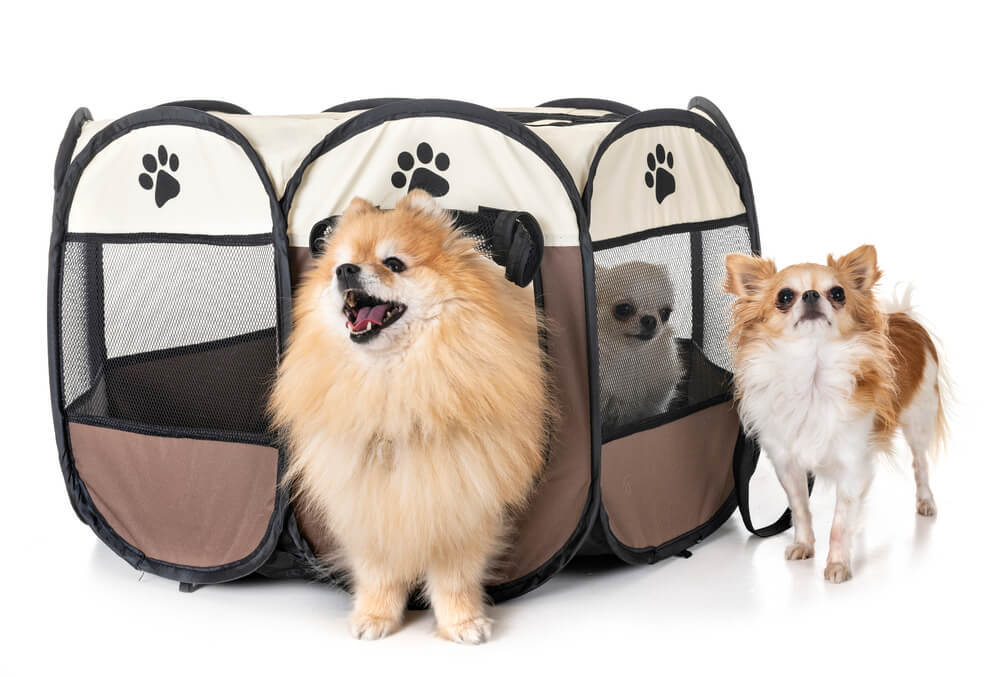 Dogs in a Portable playpen