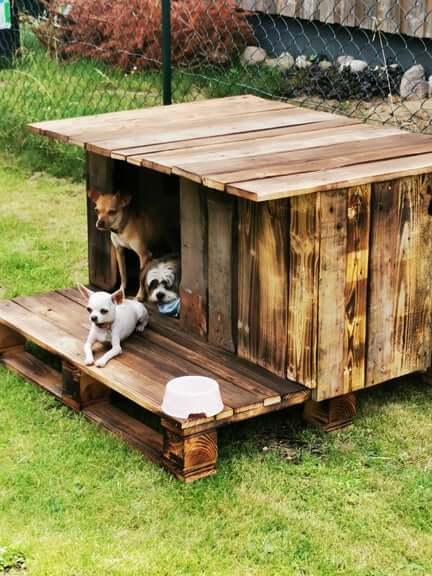 How to build a dog house with pallet wood