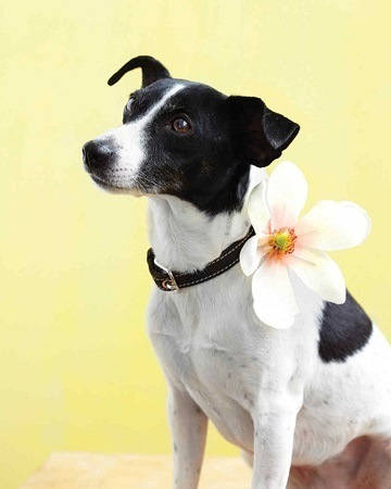 DIY Dog Collar Flower