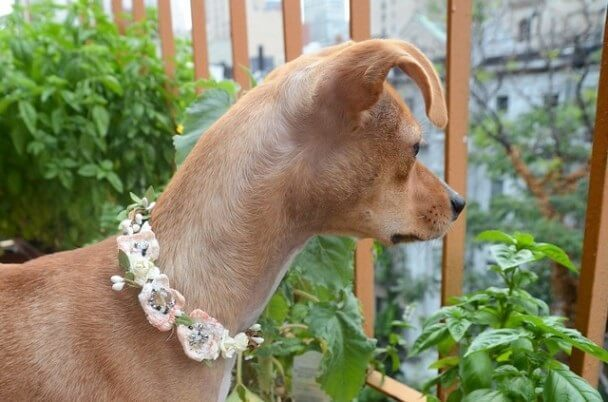 DIY Flower Dog Collar Tutorial