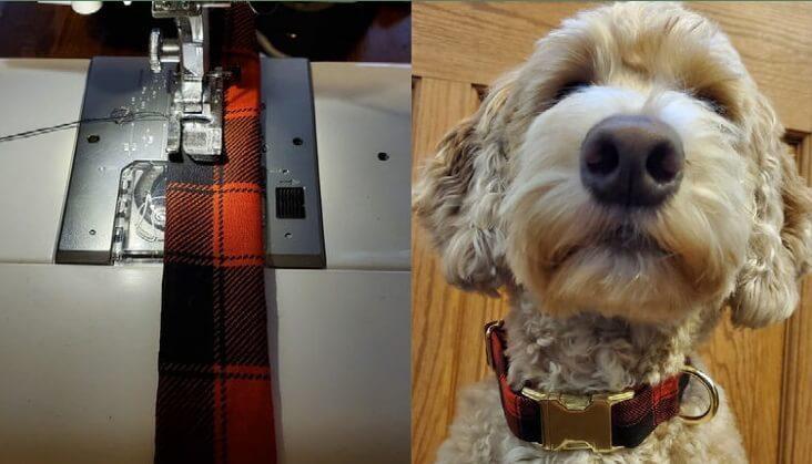 Goldendoodle wears finished dog collar